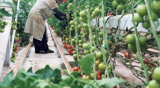 Loc de munca agricultura germania